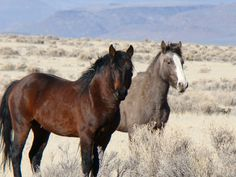 wild contacts | Wild horses can restore fire damaged ecosystems | Tuesday's Horse