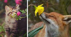 20 bájos kép virágot szimatoló állatokról
