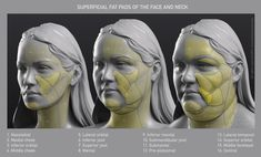 Uldis Zarins is raising funds for Form of The Head and Neck - by Anatomy For Sculptors on Kickstarter! Form of The Head and Neck. This is human anatomy for artists. Making Anatomy Visual And Understandable! Facial Anatomy, Head Anatomy, Body Anatomy, Anatomy Art, Anatomy Drawing, Anatomy Of The Face, Anatomy Organs, Anatomy Reference, Art Reference