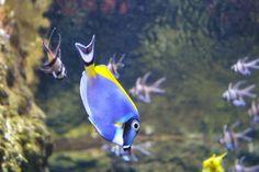 Education Joyeuse : L'Aquarium de Paris