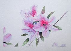 £85 ~ AZALEA original watercolour painting by by TheMinervaGallery