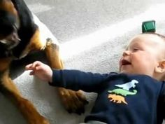 Rottweiler Licks Baby and Causes Full on Laughing Attack