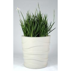 Allied Molded Products Round Pot Planter Color: Pure White