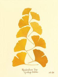 Ginkgo leaf by SandysBotanicals on Etsy