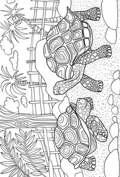 Welcome to Dover Publications Day at the Zoo Adventure Coloring Book