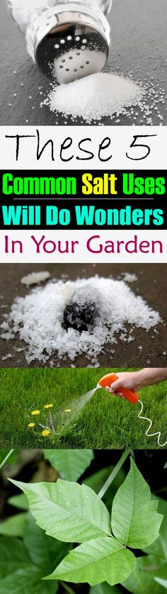 Salt is a must have in the kitchen but do you know it can be used in the garden…
