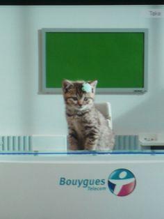 Tournage des Chatons de Bouygues Telecom