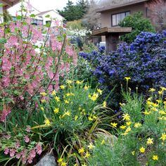 Making 'Messy' Look Good Tips for Native gardening, wildlife friendly landscaping, ditching the lawn, or moving away from a highly-manicured garden or lawn is that it is not messy.
