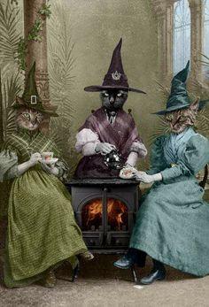 Hi class Cats in Witch hats Halloween Cat, Vintage Halloween, Crazy Cat Lady, Crazy Cats, Desenhos Love, Witch Art, Wow Art, I Love Cats, Pet Portraits