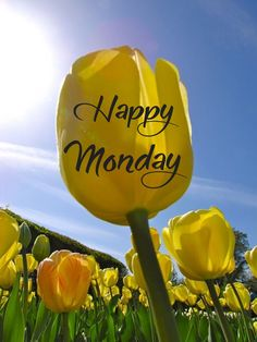 Monday Blessings, Good Morning Flowers, Happy Monday, Good Day, Blessed, Friends, Good Morning, Amigos, Hapy Day
