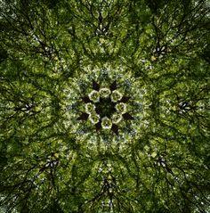 tree branch kaleidoscope