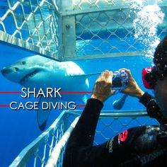 Have you ever wondered what it would be like to #swimwithsharks ? CLICK TO READ MORE - on our website. Link in bio. @CageDive #Adrenalin #Holiday