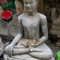 buddha cat - Pesquisa Google