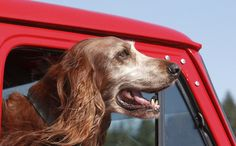 Dog Rides Away in Santa's Truck: A Feel-Good Christmas Rescue a very beautiful story