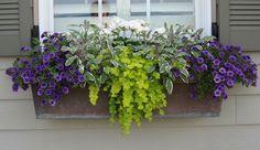 une jardinière balcon remplie de calibrachoas et de plantes retombantes