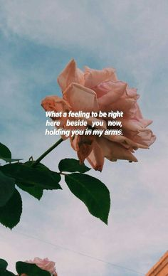 One Direction Lyric wallpaper One Direction Collage, One Direction Background, One Direction Lockscreen, One Direction Lyrics, One Direction Wallpaper, One Direction Imagines, One Direction Pictures, 1d Quotes, Song Lyric Quotes