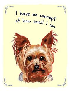 So true...my Yorkies think they are huge dogs!