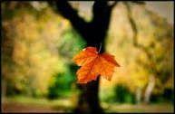 O vento balançava as árvores, e em uma delas desprende-se uma folha seca e frágil, o vento a carregava levemente,