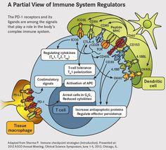 Immune System Regulators