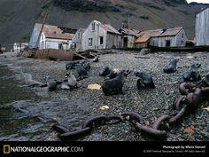 Photo: Stromness Seals