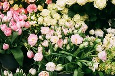 spring flowers in London French Flowers, Cat Flowers, My Flower, Spring Flowers, Cape Cod Collegiate, Flower Stands, Floral Wreath, Wreaths, Garden
