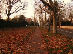 Let's Fall In Love with Autumn! : Photo