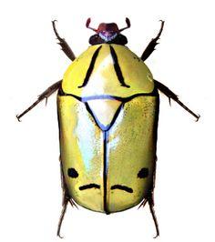 Pachnoda elegans