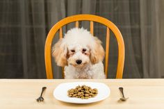 Top 5 Cheap Dog Food Choices