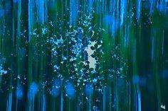 https://flic.kr/p/Nod6sv | forest dream