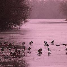 The #river #Bodrog near #Bodrogkisfalud Photo by Bihari Zoltán  #tokajwineregion #tokaji #visittokaj #tokajhegyalja #tokajiaszú #tokajwine #tokajiborok #wine #aszú #ig_magyarorszag #ig_magyarország #hungary_gram #loves_hungary #visithungary #naturelovers #nature @eurotravellers #UNESCO #unescoworldheritage #worldheritagesite