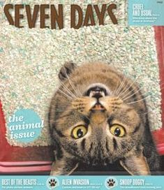Congrats to Seven Days! Winner in the category Cover Design (small circulation / under at the Alt Weekly Awards. See more collections of winners at the fab Newmanology page (bookmark the site! Grunge Art, Bloodhound, Make Me Smile, Cover Design, Awards, Magazine, Typography, Animals, Ideas