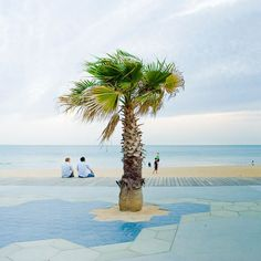Palm tree by the beach <3