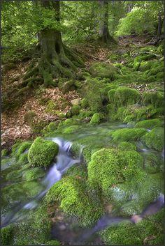 Landscape, Nature mossy river