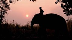 Elephant at sunset, Four Seasons Tented Camp Golden Triangle #TentedCamp #Thailand http://www.fourseasons.com/goldentriangle/accommodations/