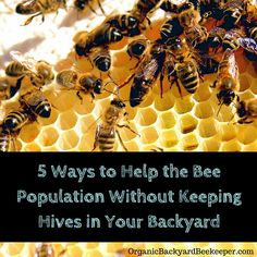 Maybe you're not ready for the time commitment of keeping a full hive, but with the bee population struggling in many places, every little bit helps the bees to thrive.