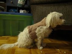 Crocheted dog sweaters are a cinch to make. Learn how to crochet a dog sweater. Free crochet dog sweater patterns sources are listed here. Diy Crochet Dog Sweater, Dog Sweater Pattern, Dog Pattern, Crochet Pet, Free Pattern, Sweater Patterns, Simple Pattern, Crochet Santa, All Free Crochet