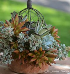 Designing 'Outside the Dome' ~ design/photo: The Succulent Perch Growing Succulents, Succulents In Containers, Cacti And Succulents, Planting Succulents, Succulent Centerpieces, Succulent Arrangements, Succulent Terrarium, Dish Garden, Garden Oasis