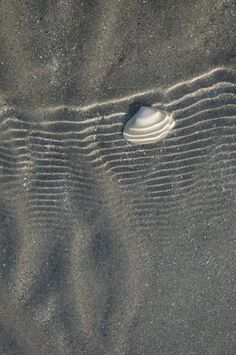 Grey Sand and Sea Shell Minimal Photography, Nature Photography, Charcoal Color, Gray Color, Grey And Gold, Black And White, Dark Grey, Pub Vintage, Water Surfing