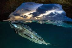 The Smithsonian Runs A Photo Contest… Here Are This Year's Finalists. - http://www.lifebuzz.com/photography-contest/