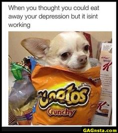 When the Chihuahua tried to wear a Cheetos bag dress: The 61 Most Awkward Moments In The History Of Dogs Animals And Pets, Baby Animals, Funny Animals, Cute Animals, Dog Memes, Funny Memes, Cute Puppies, Cute Dogs, Chihuahua Love