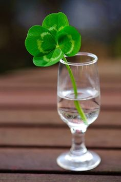 seasonalwonderment:    Luck o' the Irish