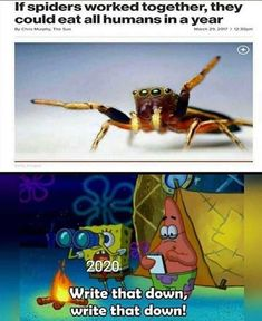 The Best 30 Memes About Coronavirus All Meme, Crazy Funny Memes, Funny Animal Memes, Really Funny Memes, Stupid Funny Memes, Funny Relatable Memes, Memes Humor, True Memes, Funny Humor