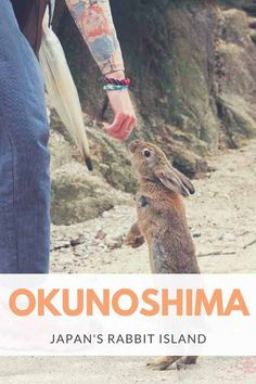 Visit Okunoshima, Japan's Bunny Island - Visit Rabbit Island and learn about the bunnies and history of the Okunoshima Poison Gas Factory Japan Travel Tips, Travel Tours, Asia Travel, Travel Guides, Travel Destinations, Travel Advice, Travel Info, Bunny Island, Rabbit Island
