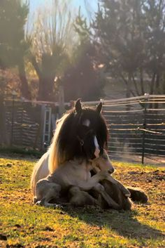 newborn foal climbing into the lap of his mother shortly after he was born. Precious beyond words.