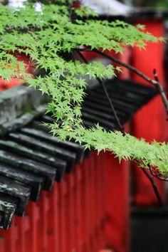伏見稲荷神社 楓