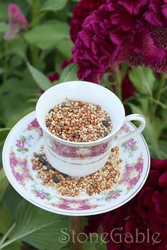 Tea Cup Bird Feeder- go next to the houses?