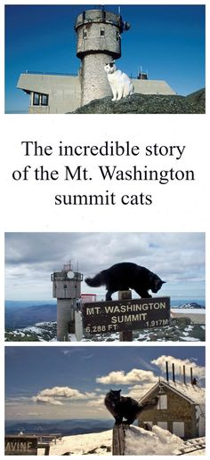 Looking for things to do in North Conway, New Hampshire? Visit the Mount Washington summit and Observatory Weather Discovery Center and its cats. Read more: http://www.traveling-cats.com/2014/12/cat-from-north-conway-usa.html (New Hampshire, Mount Washington, North Conway, summit, cats, Obervatory Weather Discovery Center, mountains, snow, visit, things to do in New Hampshire, what to visit in New Hampshire)