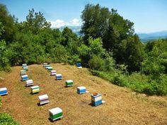 Το μελισσοκομείο στα ορεινά της Ηπείρου. Στο βάθος διακρίνονται οι κορυφές των Τζουμέρκων. Εδώ το φθινόπωρο συλλέγουμε μέλι ερείκης και κουμαριάς. Our Apiary on Pindus mountain range in northern Greece.Here we collect Heather Honey.