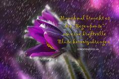 """Manchmal braucht es die """"Regenpause"""" um eine kraftvolle Blüte hervorzubringen."""