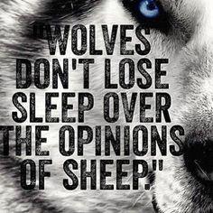 Wolves don't lose sleep over the opinion of sheep. /Game of Thrones/  Láttál már farkast, aki rosszul alszik a birkák véleménye miatt? /Trónok harca/